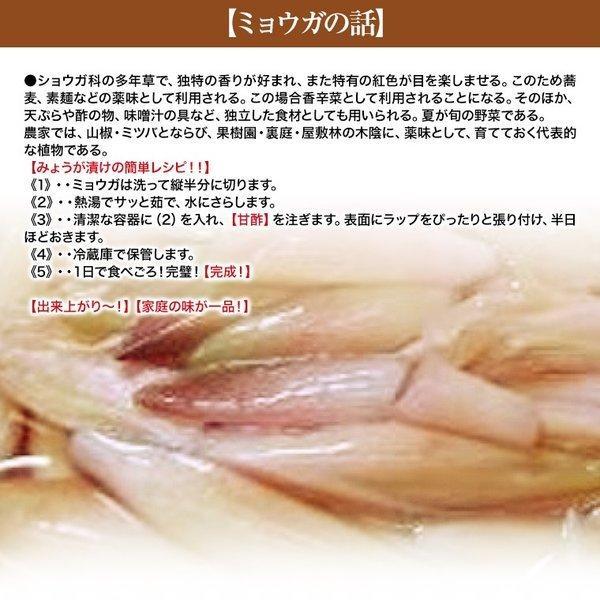 みょうが 約150g入り  高知県産  かほり優しい!【送料込】お試し!|fukui|03