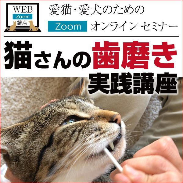 猫さんの歯磨き実践講座 Zoomセミナー|fukunekohonpo