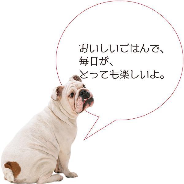 愛猫・愛犬のための手作りごはん Zoomセミナー|fukunekohonpo|17