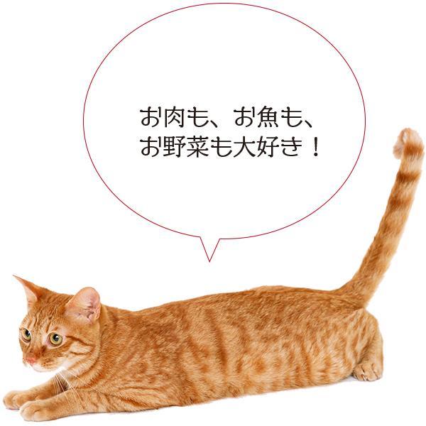 愛猫・愛犬のための手作りごはん Zoomセミナー|fukunekohonpo|18