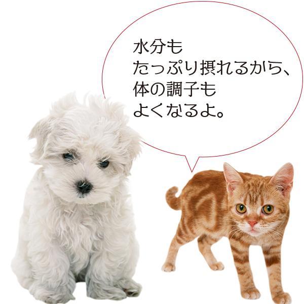 愛猫・愛犬のための手作りごはん Zoomセミナー|fukunekohonpo|19
