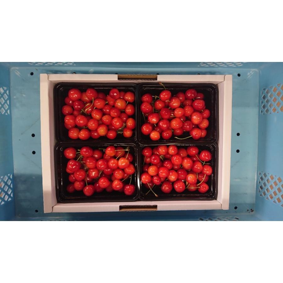 まるせい果樹園|さくらんぼ|紅秀峰|280g×4p入|fukushimamarusei