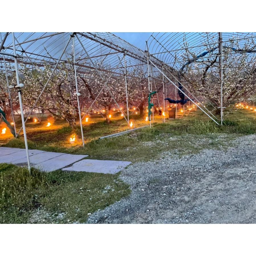 まるせい果樹園|さくらんぼ|紅秀峰|280g×4p入|fukushimamarusei|03