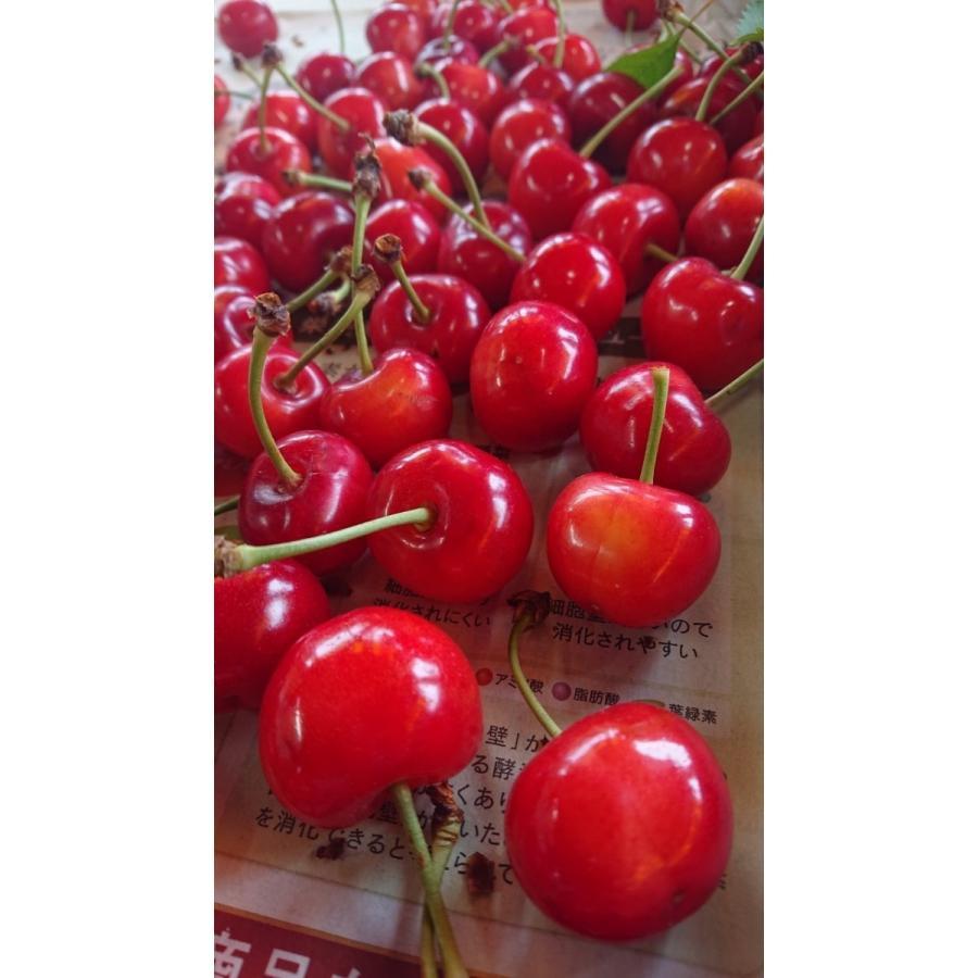 まるせい果樹園|さくらんぼ|紅秀峰|280g×4p入|fukushimamarusei|04