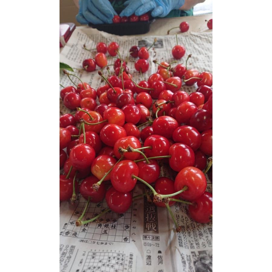 まるせい果樹園|さくらんぼ|紅秀峰|280g×4p入|fukushimamarusei|05