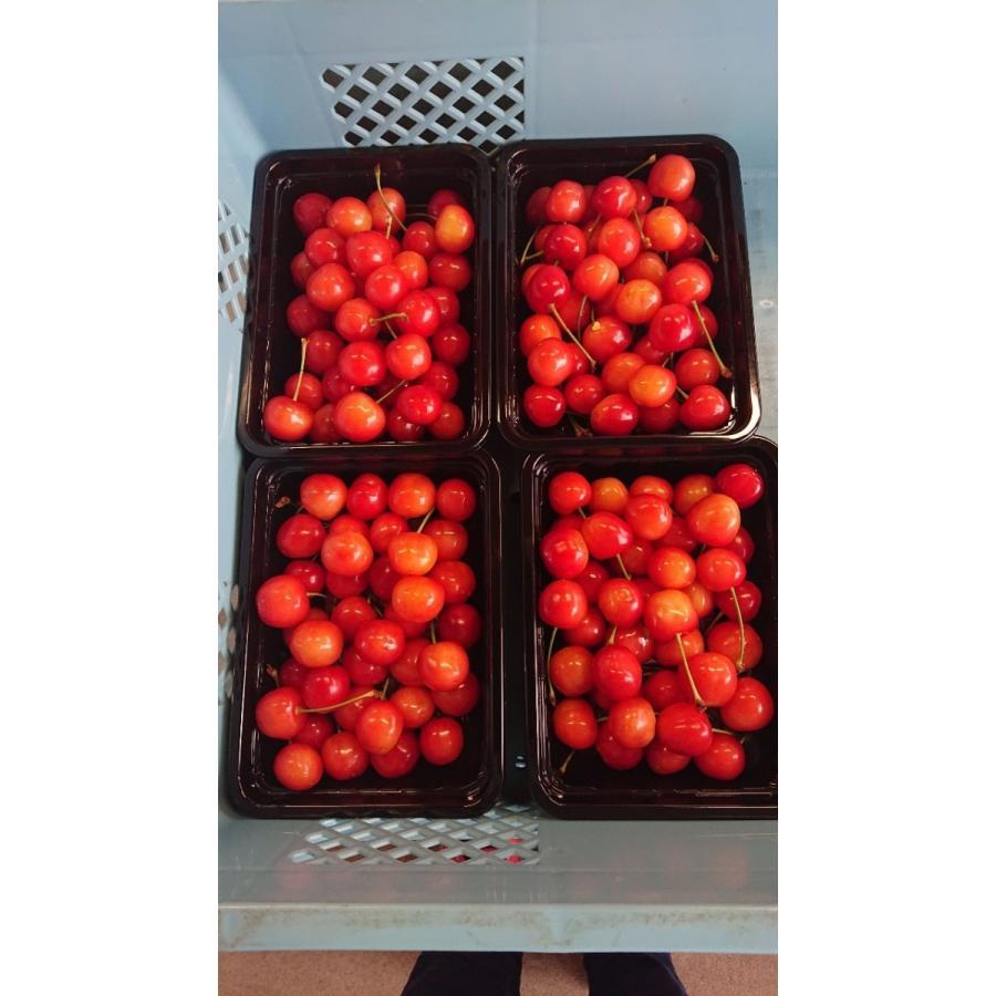 まるせい果樹園|さくらんぼ|紅秀峰|280g×4p入|fukushimamarusei|06