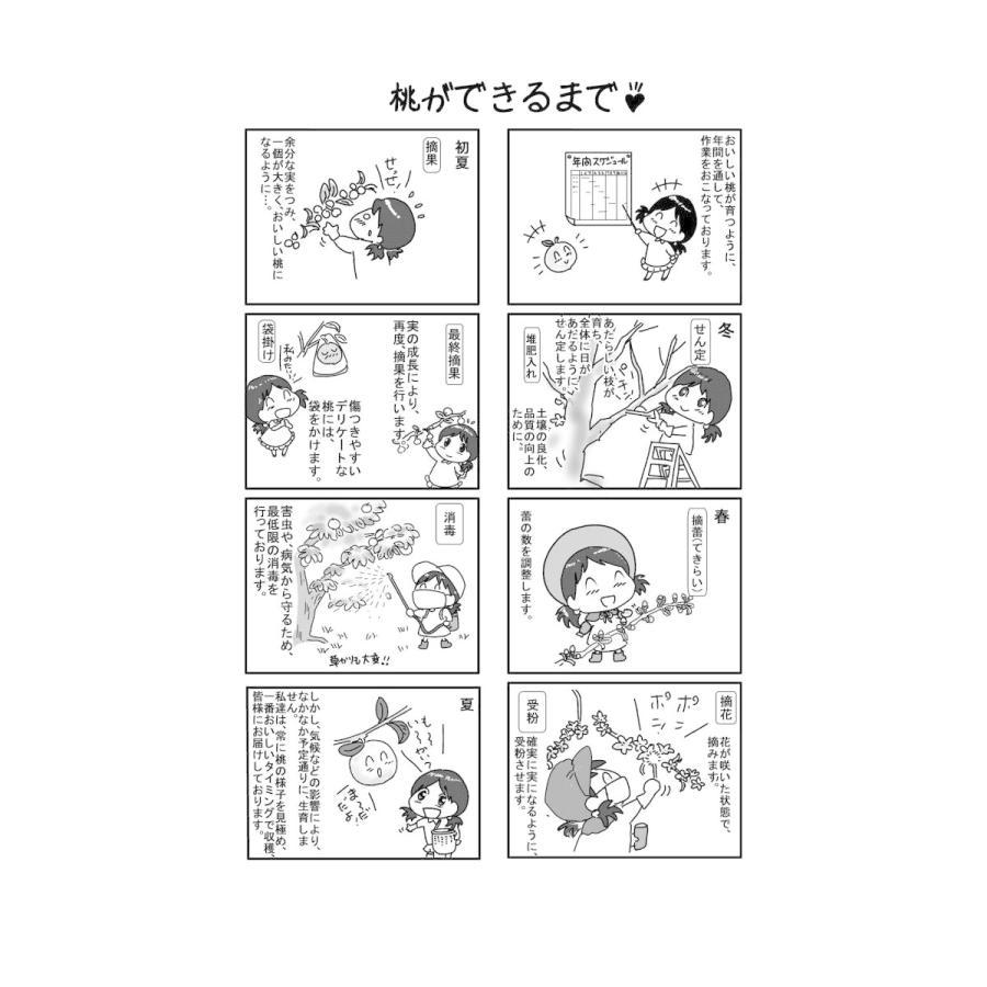 まるせい果樹園の桃 日川白鳳 ご贈答用 |fukushimamarusei|07