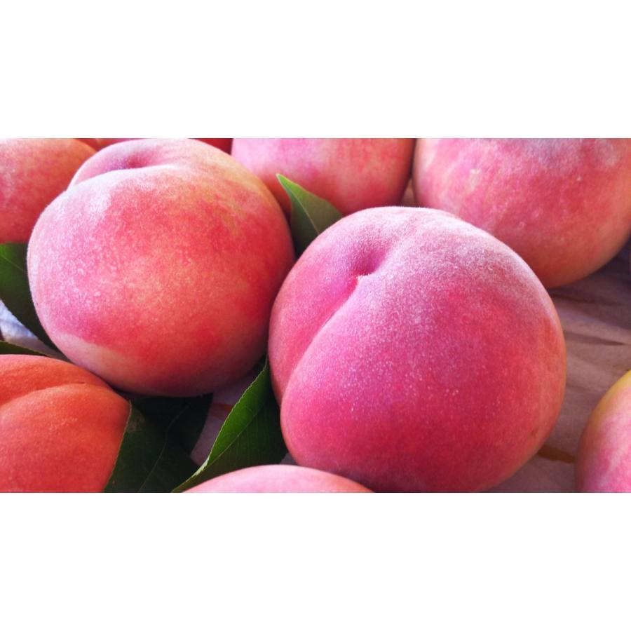 まるせい果樹園の桃 川中島白桃 ご贈答用 |fukushimamarusei|05