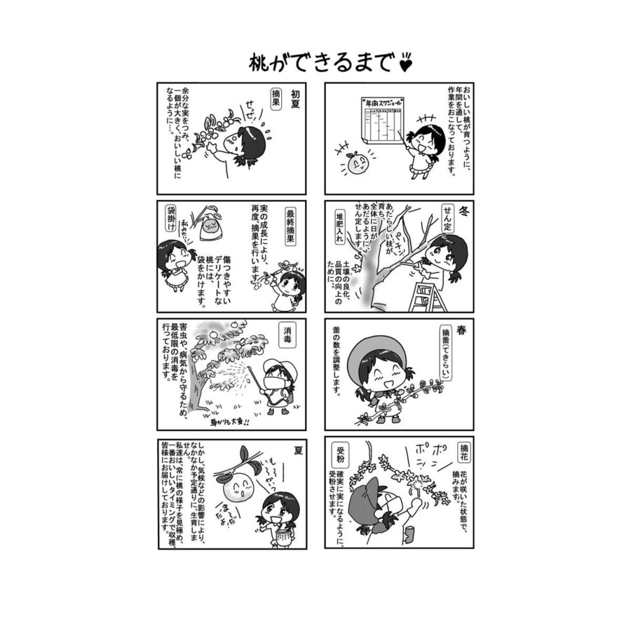 まるせい果樹園の桃 白鳳  ご贈答用 |fukushimamarusei|07