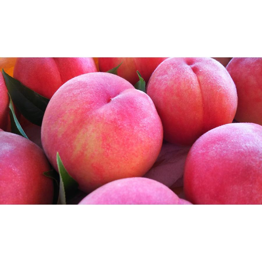 福島|まるせい果樹園|品種お任せ|もも|2k箱|fukushimamarusei|04