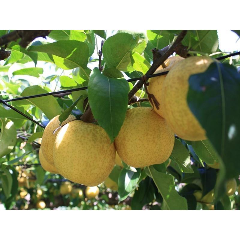 まるせい果樹園 まるかじりDコース fukushimamarusei 03