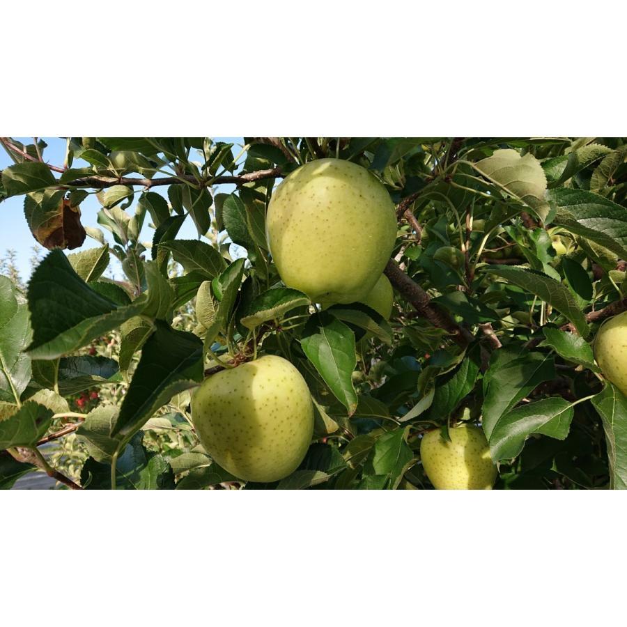 まるせい果樹園季節のりんごシリーズ 送料込 りんご リンゴ |fukushimamarusei|02