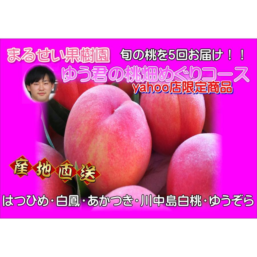 まるせい果樹園 ゆう君の桃畑めぐりコース fukushimamarusei