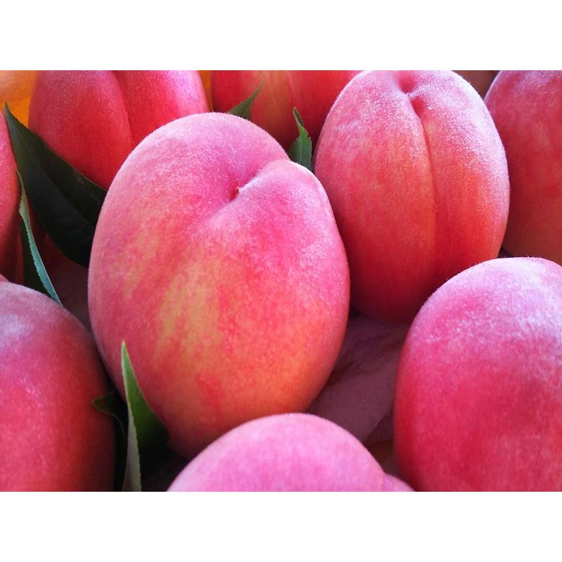 まるせい果樹園 ゆう君の桃畑めぐりコース fukushimamarusei 04