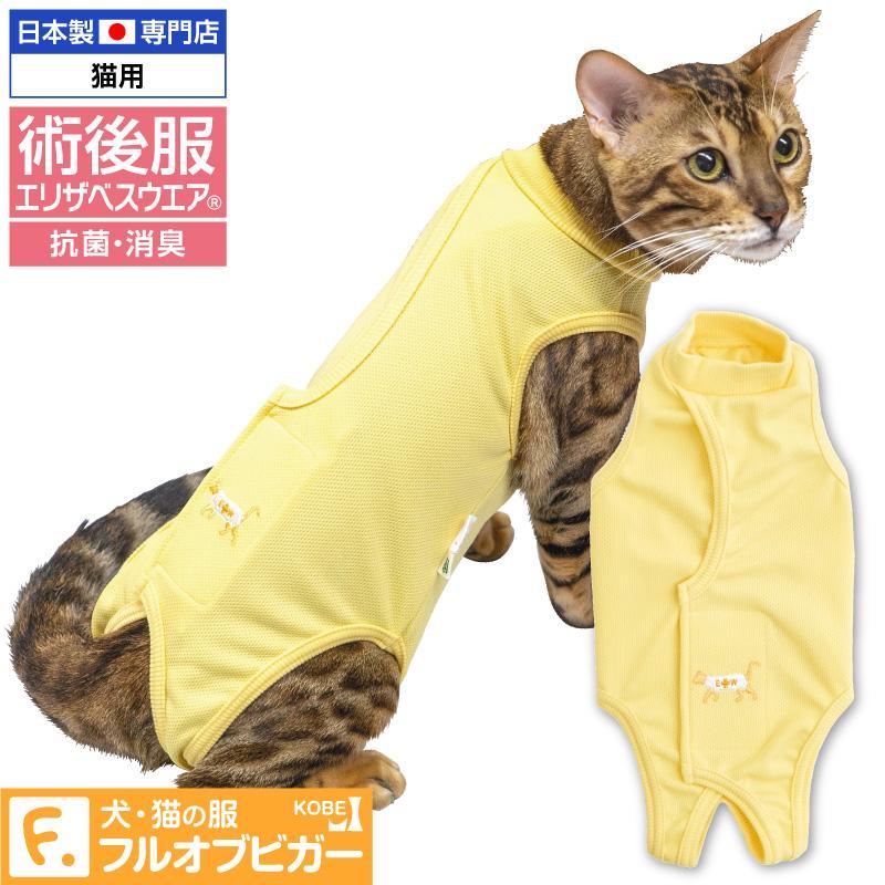 猫 術後服