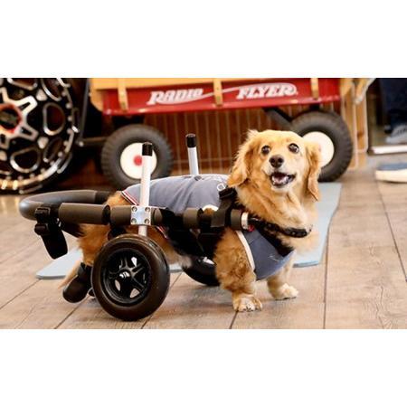ふるさと納税 ダックスフンド用二輪車椅子(体重15キロ以下) 岐阜県池田町