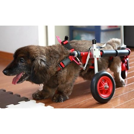 ふるさと納税 ダックスフンド用三輪車椅子(体重15キロ以下) 岐阜県池田町