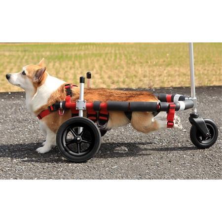 ふるさと納税 中型犬用三輪車椅子(背丈33·65cm 体重22キロ以下) 岐阜県池田町