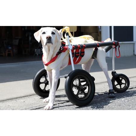 ふるさと納税 大型犬用三輪車椅子(背丈50·75cm 体重40キロ以下) 岐阜県池田町