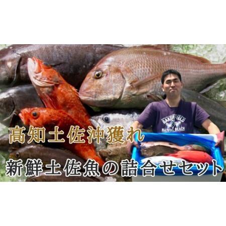 ふるさと納税 新鮮土佐魚の詰合せセットE 高知県宿毛市