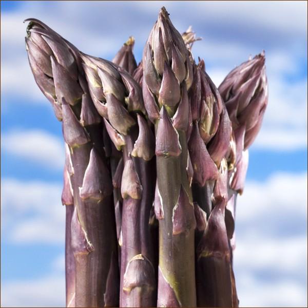 【予約】北海道産 アスパラガス パープルアスパラ 600g (L-2Lサイズ) アスパラ 紫 パープル ギフト 野菜 食品 北海道グルメ 送料無料 お取り寄せ g-hokkaido 02
