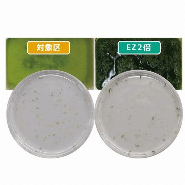 送料無料 キョーリン イージーグリーン EZGREEN 200ml 植物プランクトン培養液|g3aqualab|02