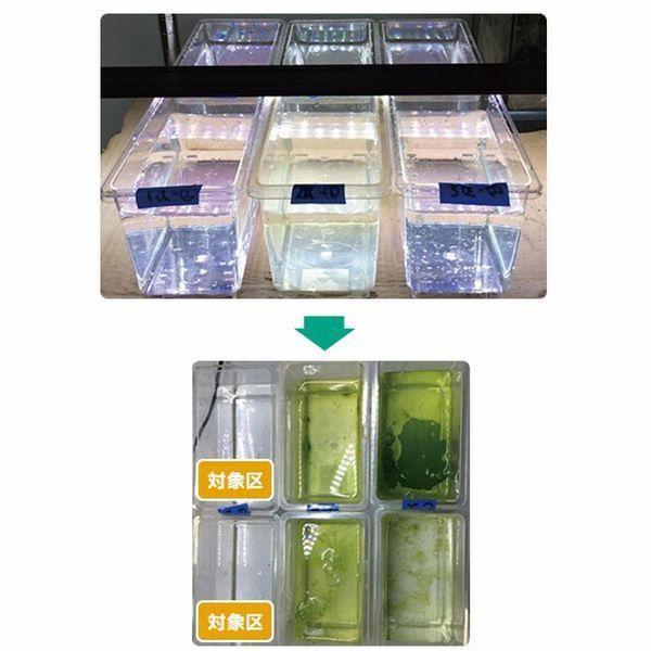 送料無料 キョーリン イージーグリーン EZGREEN 200ml 植物プランクトン培養液|g3aqualab|03