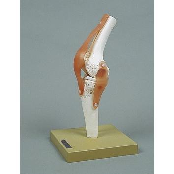 通販 膝関節の機能像 (メーカー取り寄せ10−14日), 夢と希望の店ブエナビスタ 9103e5a8