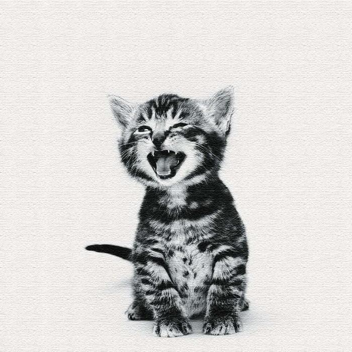 猫 ファブリックパネル アートパネル アートパネル アートパネル アートデリ XLサイズ 100cm×100cm lib-5109083s4 24a