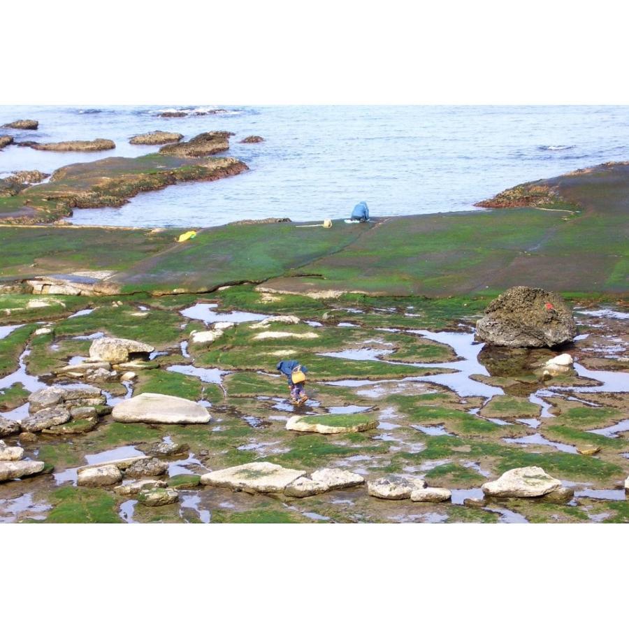 輪島産〈乾燥〉岩のり genten 04