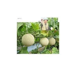 マスクメロン 2玉(1.4kg×2玉) 合計2.8kg・贈答用「果物の王様」百貨店品質の高級品・ギフト・送料無料 110412 gift-hiroba 04