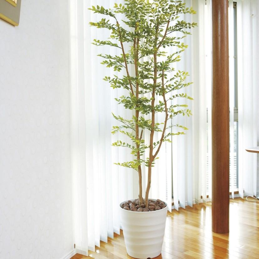 ゴールデンリーフ 180cm /造花の観葉植物 光触媒(空気浄化) インテリア・グリーン鉢植え /155B400-3217|goodfellow
