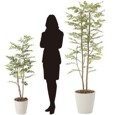ゴールデンリーフ 180cm /造花の観葉植物 光触媒(空気浄化) インテリア・グリーン鉢植え /155B400-3217|goodfellow|04