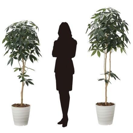 造花 観葉植物 「パキラ-DZ 180cm」 光触媒 空気清浄 インテリア グリーン 30 goodfellow 03