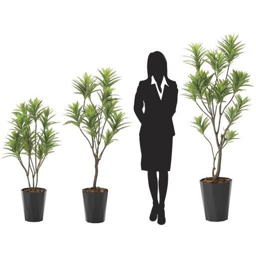 造花 観葉植物 「フレッシュ・ドラセナ 145cm」 光触媒 空気清浄 インテリア グリーン 38|goodfellow|03