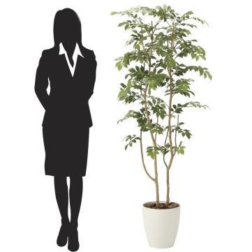 造花 観葉植物 「マウンテンアッシュ 160cm」 光触媒(空気浄化) インテリア・グリーン 34|goodfellow|03