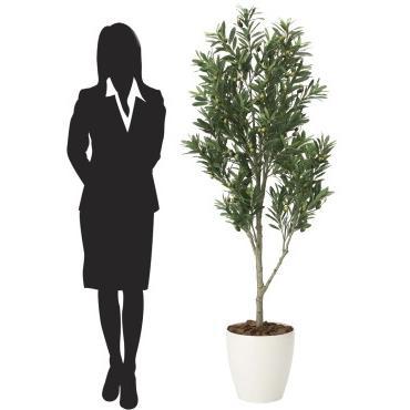 造花 観葉植物 「オリーブ・ツリー 165cm」 光触媒(空気浄化) インテリア・グリーン 42 goodfellow 03