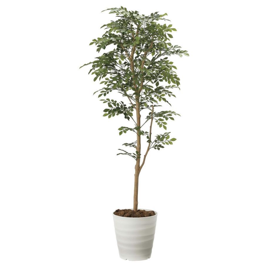 造花 観葉植物 「トネリコ 160cm」 光触媒(空気浄化) インテリア・グリーン 40|goodfellow