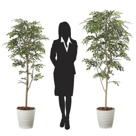 造花 観葉植物 「トネリコ 160cm」 光触媒(空気浄化) インテリア・グリーン 40|goodfellow|03