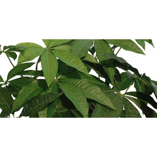 観葉植物 造花 光触媒 人工植物 グリーン /EX.ロイヤルパキラ135cm 129A38014|goodfellow|02