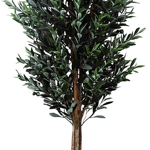 造花 観葉植物 光触媒 インテリアグリーン 鉢植え /オリーブ160cm 148A50025 goodfellow 02