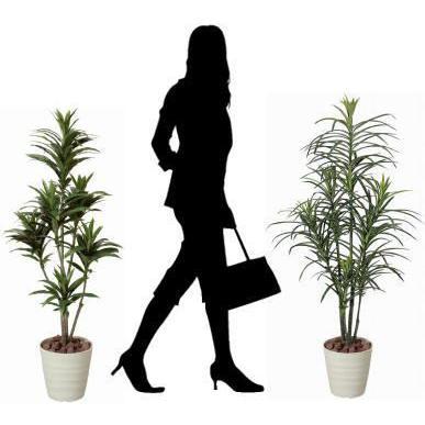 人工観葉植物 鉢植え インテリアグリーン 光触媒 造花 /ドラセナ・コンパクタ125cm 185A15018|goodfellow|03