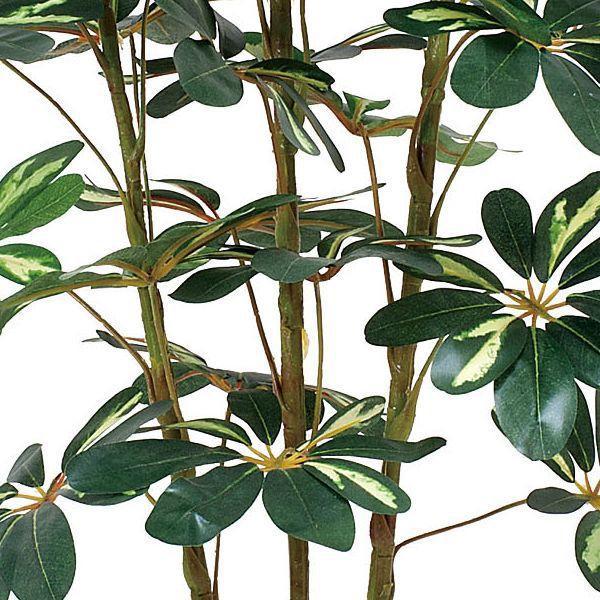造花 観葉植物 光触媒 インテリアグリーン 鉢植え /カポック 斑入り150cm 355A20022|goodfellow|02