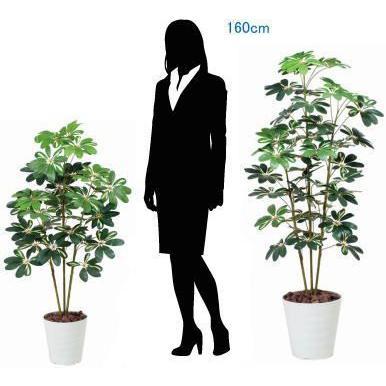造花 観葉植物 光触媒 インテリアグリーン 鉢植え /カポック 斑入り150cm 355A20022|goodfellow|03