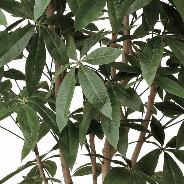インテリアグリーン 造花 光触媒 人工植物 観葉植物 鉢植え /パキラ 下草付180cm|goodfellow|02