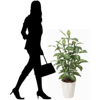 人工観葉植物 鉢植え インテリアグリーン 光触媒 造花 /ディフェンバキア110cm|goodfellow|03