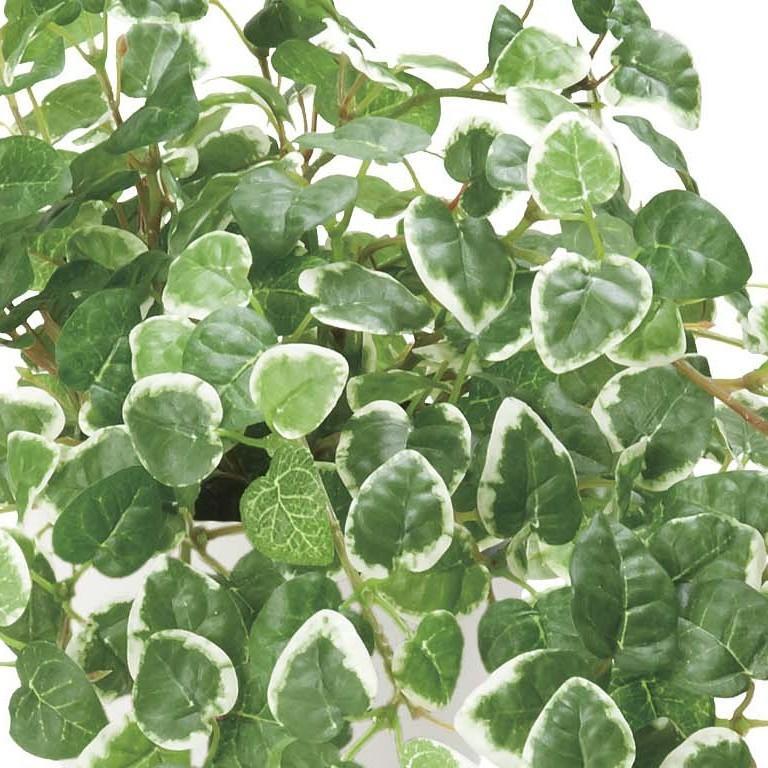 造花 観葉植物 「プミラ」 光触媒 空気清浄 インテリアグリーン 63|goodfellow|02