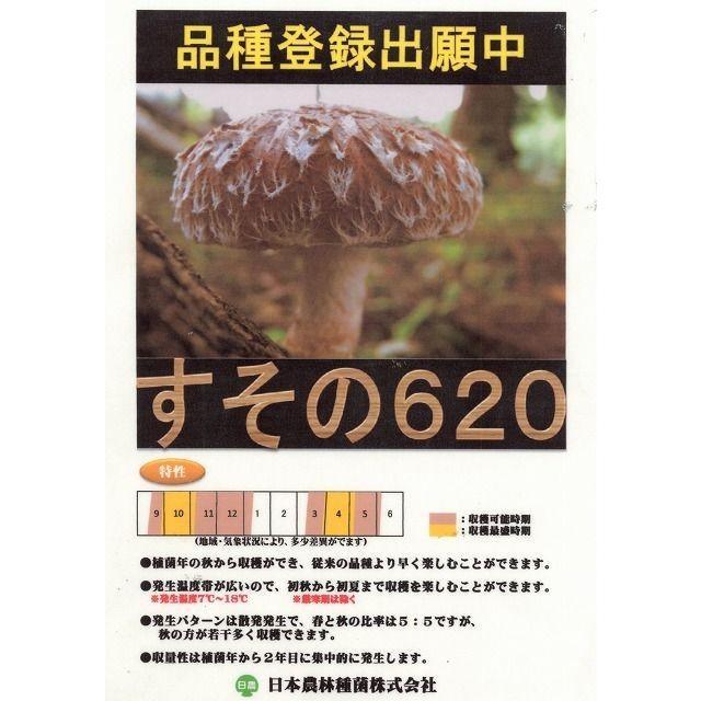 きのこ菌 しいたけ菌 棒型620 200駒入り green-loft 02