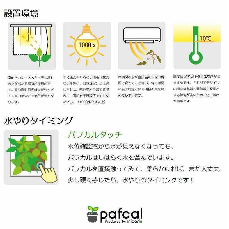 ミドリエデザイン KOMIDORI(ミドリエデザイン最小サイズ)コミドリ3個セット バリエーション有|green-planet|12