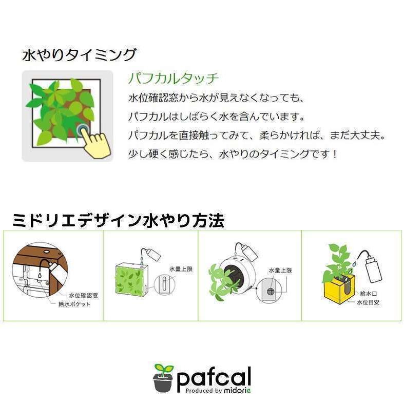 ミドリエデザイン KOMIDORI(ミドリエデザイン最小サイズ)コミドリ3個セット バリエーション有|green-planet|13